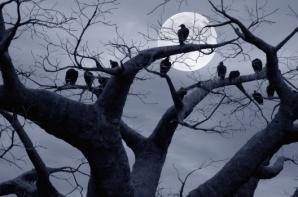 cuervos_luna_árbol.jpg